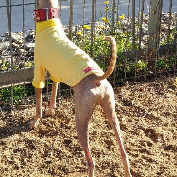 Sudadera Piccolo Yellow